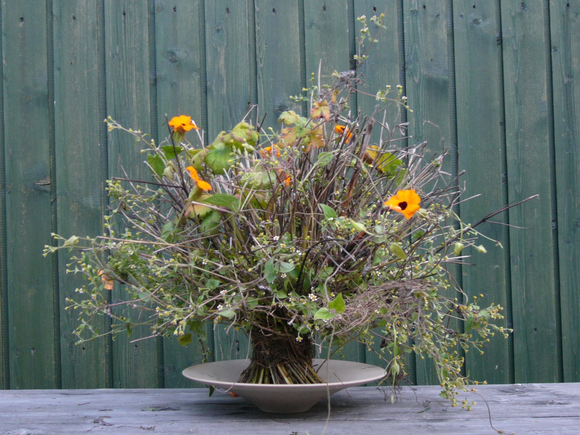 Herbst mono strauss